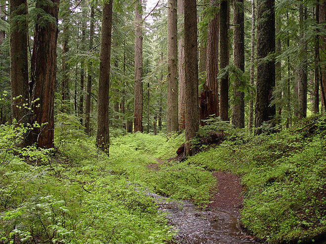 Поиск в лесу станет отличным отдыхом, даже если вы не найдете ни одной монеты